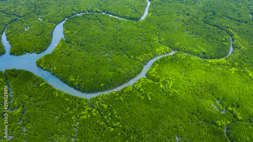 Foto op Plexiglas Groene Aerial view mangrove jungles in Thailand, River in tropical mangrove green tree forest top view, trees, river. Mangrove landscape.