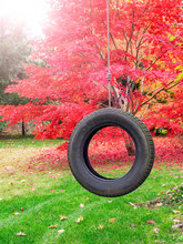 Colorful Fall Leaves On Japanese Maple Trees With Tire Swing In Backyard