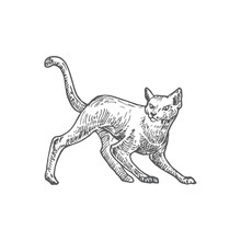 Hand Drawn Halloween Scary Crawling Cat Vector Illustration. Abstract Rustic Animal Sketch. Holiday Engraving Style Drawing.