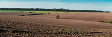 View Of A Plowed Field And A Lonely Tree.