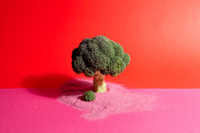 Pink Red Broccoli And Sand