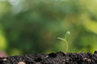 agriculture plant seeding growing step concept in garden