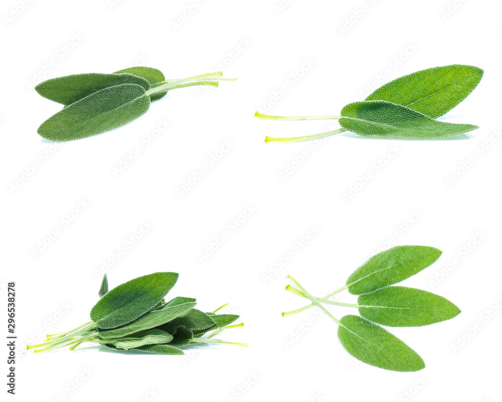 Fototapety, obrazy: Sage leaves isolated on white background  (Mix, set , collection)