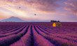 canvas print picture - Lavender Dream - Valensole France