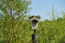 Wooden Birdhouse With Moss Gro...