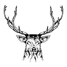 Wild Deer Sketch, Outline Port...