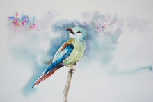 Watercolor Painting Of Beautiful Bird
