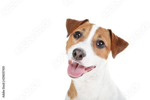 Obraz na plátně Beautiful Jack Russell Terrier dog isolated on white background