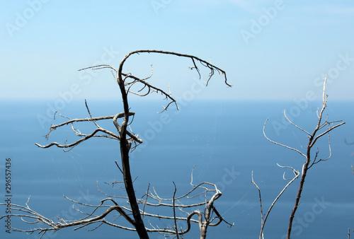 Photo Rami secchi contorti tra cielo e mare