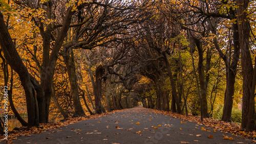 Foto auf Gartenposter Schokobraun Scenic alley in the Oliwa park in autumn scenery. Straight from Tolkien`s books.
