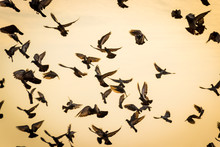 Silhouettes Of Birds Flying