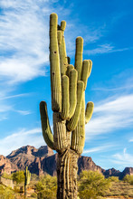 Cactus Against Mountain Backgr...