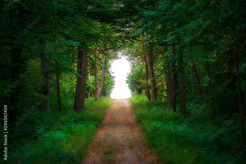 Fototapeta Straight path leading into a forest clearing formed as a keyhole