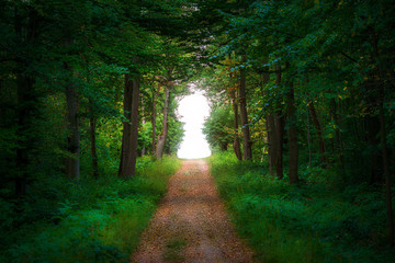 Straight path leading into a forest clearing formed as a keyhole