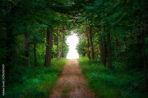Straight path leading into a forest clearing formed as a keyhole - fototapety na wymiar
