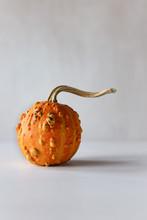 Ugly Organic Pumpkin On White ...