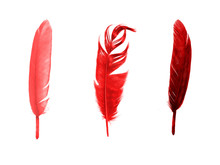 Set Of Red Color Feathers Isol...
