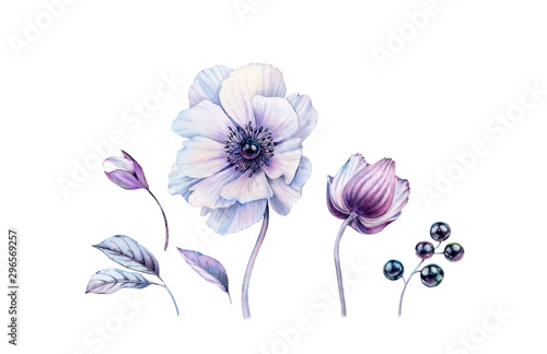 Watercolor white anemones with black pearl inside set Wallpaper Mural