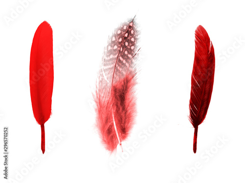 Photo  set of red color feathers isolated on white