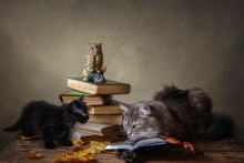 Adorable Gray Kitty In Glasses And Old Books
