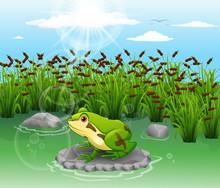 Cute Frog Beautiful Scenery Iilustration Vector