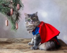 Beautiful Gray Cat In A Costume  Superhero Under The Christmas Tree