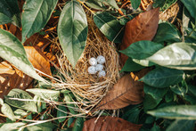 Bird Nest With Eggs In The Bea...