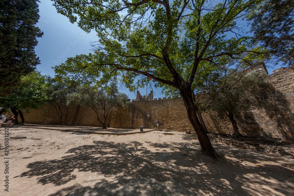 Photo tree in castle