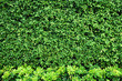 Tropical green leaf wall texture background.
