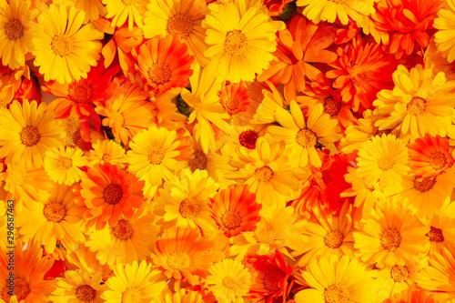 Fotografía  Seamless background of orange yellow marigold flowers