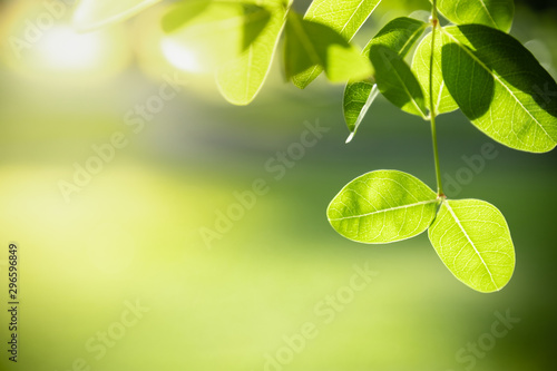 Foto auf Gartenposter Gelb Close up of nature view green leaf on blurred greenery background under sunlight with bokeh and copy space using as background natural plants landscape, ecology wallpaper concept.
