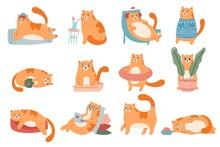 Cute Cats. Cat In Box, Adorabl...