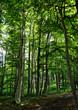 canvas print picture - Schöne deutsche Waldlichtung im Sonnenschein