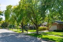 Green Tree Lined Street At A Suburban Midwestern Neighborhood With Homes
