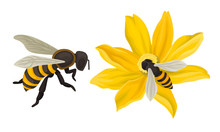 Bee Flying Around The Flower And Gathering Blossom Dust Vector Illustration