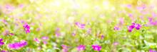 Summer Bright Background. Summ...