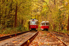 Autumn Forest Through Which An...