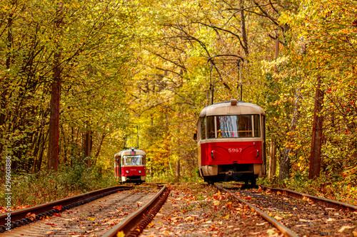 Foto auf AluDibond Eisenbahnschienen Autumn forest through which an old tram rides (Ukraine)