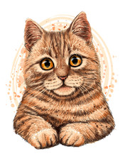 Cat. The Color, Graphic, Artistic Drawing Of A Cute Cat  On A White Background With A Spray Of Watercolor.