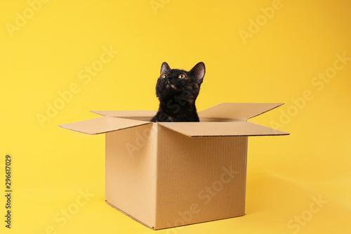 Billede på lærred Cute black cat sitting in cardboard box on yellow background