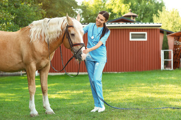 Young veterinarian with palomino horse outdoors on sunny day