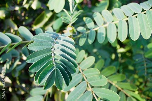 green leaves fractal shape geometric