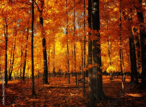 Garden Poster Orange autumn in the forest
