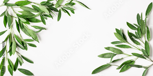Poster Spring Fresh sage leaves pattern frame