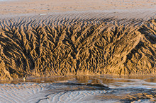 Patterns Of Tidal Mud Rivulets In An Estuary