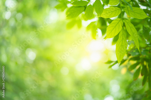 Arbre Green leaf background with beautiful bokeh under sunlight with copy space. Natural and freshness concept.