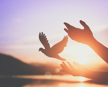 Woman Praying And Free Bird Enjoying Nature On Sunset Background, Hope Concept .soft Focus Picture.cinematic Tone