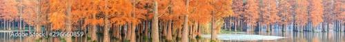 Foto auf Gartenposter Rotglühen Beautiful colorful forest landscape in autumn season
