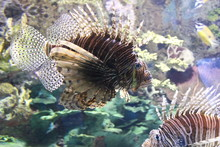 Aquarium Stills From Ripleys Aquarium In Toronto Canada