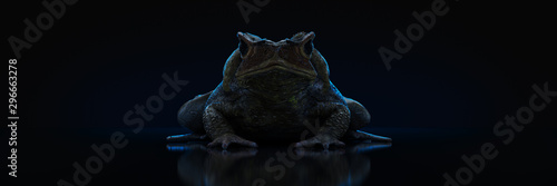 Photo Grass Frog Close-Up on a dark background. 3d rendering
